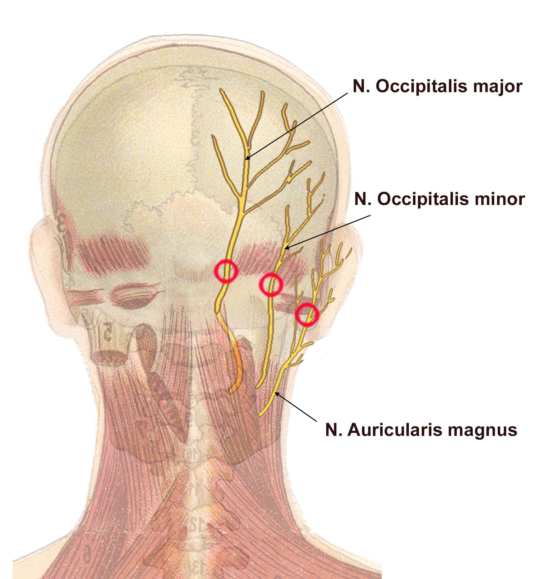 Sensoriske nerver